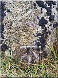 NY2201 : Ordnance Survey Cut Mark by Adrian Dust
