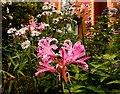 SO6023 : Autumn garden by Jonathan Billinger