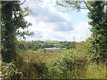 H9020 : Wetland on the eastern shores of Lisleitrim Lough by Eric Jones