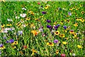 SJ4160 : Wildflowers in Eaton Hall Gardens by Jeff Buck