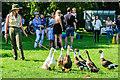 SJ4161 : Duck herding at Eaton Hall by Jeff Buck