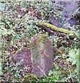SD1785 : Boundary Stone by Adrian Dust