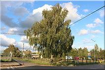 TQ7471 : Islingham Farm Road, Wainscott by David Howard