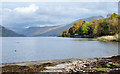 NN1207 : Shore of Loch Fyne at St. Catherines by Trevor Littlewood