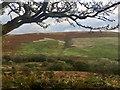 SS9586 : Bracken-clad Mynydd y Gaer by Alan Hughes
