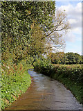 SO8398 : Bennett's Lane south of Great Moor in Staffordshire by Roger  Kidd