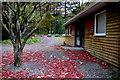 H4881 : Fallen leaves, Gortin Glens Forest Park by Kenneth  Allen