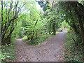 TQ3353 : Paths through woodland, near Godstone by Malc McDonald