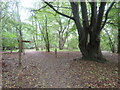 TQ3653 : Paths in Marden Park, near Godstone by Malc McDonald