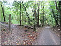 TQ3553 : Track through woodland near Caterham by Malc McDonald