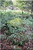 NT5570 : Old Gravestones in Baro Kirkyard (1) by Anne Burgess