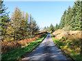 NR9882 : Coniferous trees alongside the Otter Ferry road by Trevor Littlewood