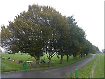 SK7296 : Tree lined road by Graham Hogg