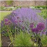 NT6779 : A purple patch, Lauderdale Park by Richard Webb