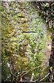 NX9820 : Benchmark on stone gatepost at field gateway near Ghyll Brow by Luke Shaw