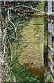 NX9920 : Benchmark on stone gatepost at field gateway east of Low Moresby by Luke Shaw