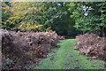 SU2013 : Grassy path in Amberwood Inclosure by David Martin