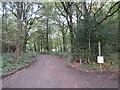 TQ3759 : Bridleway through Holt Wood, near Warlingham by Malc McDonald
