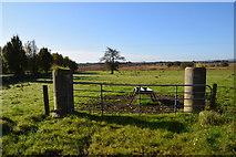 H5173 : Gate, Killycurragh by Kenneth  Allen