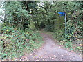 TQ3859 : NCN21 near Warlingham by Malc McDonald