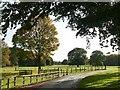 SE6523 : Parkland at Carlton Towers by Graham Hogg