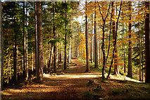 NH5966 : Path along the esker, Evanton Community Wood by Julian Paren