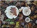 TF0820 : Autumn by Bob Harvey