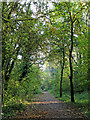 SO7484 : Severn Valley Country Park near Highley in Shropshire by Roger  Kidd
