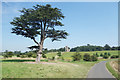 SO8844 : View in Croome Park by Des Blenkinsopp