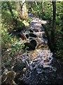 SK2578 : Burbage Brook in Padley Gorge by Graham Hogg