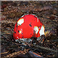 NT4934 : A fly agaric mushroom on Gala Hill by Walter Baxter