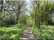 TQ6792 : Path, Laindon Common by Robin Webster