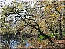 TQ2636 : Goffs Park, Crawley (2) by Stephen Richards
