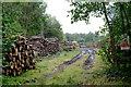 SO6108 : Timber stacks by John Winder