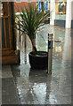 SX9192 : Rain, Guildhall Centre, Exeter by Derek Harper