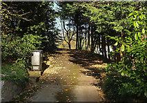 SX9364 : Driveway from Ilsham Road, Wellswood by Derek Harper