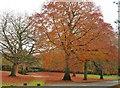 TF6928 : Autumn colour near Sandringham House in Norfolk by Richard Humphrey