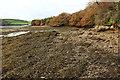 SX7540 : Edge of Frogmore Creek by Derek Harper