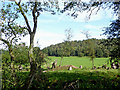 SJ9850 : Pasture and woodland north-east of Consall, Staffordshire by Roger  Kidd