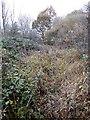 SU3289 : Path through Long Spinney Copse by Vieve Forward