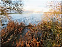 TL4279 : Weeds and flood water at Sutton Gault - The Ouse Washes by Richard Humphrey