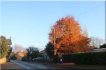 TL3774 : Autumn leaves on East Street, Bluntisham by David Howard