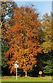 SU7761 : Warbrook House hotel - Autumnal tree in the grounds by Rob Farrow