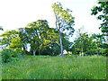 NS5667 : Wilding area in Glasgow Botanic Garden by Stephen Craven