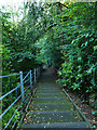 NS5667 : Steps down to the river, Glasgow Botanic Garden by Stephen Craven