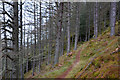 NO0143 : Path on Polney Crag, Dunkeld by Jim Barton
