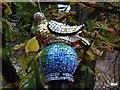 SO9422 : A pigeon, Cheltenham's symbol by Philip Halling