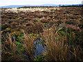 NH7344 : Underfoot, Culloden Battlefield by Julian Paren