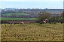 SP7190 : Horses near Gallow Hill by Mat Fascione