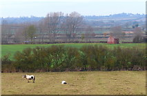 SP7190 : Farmland near Gallow Hill by Mat Fascione